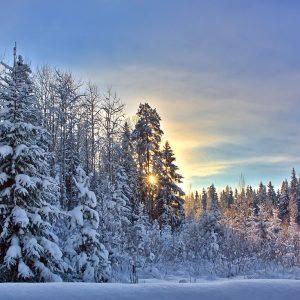Корпоративные бизнес тренинги зима